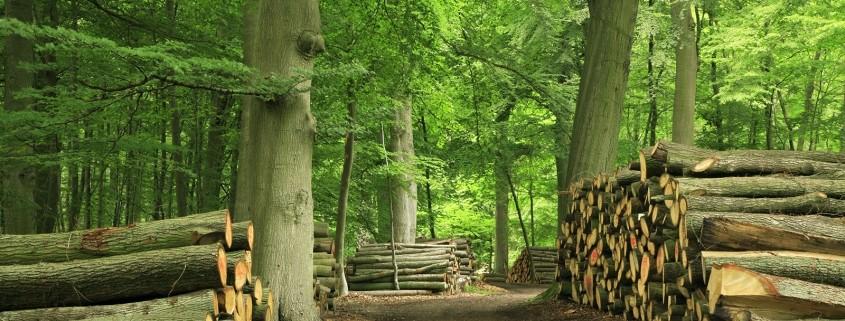 Openhaardhout Staatsbosbeheer